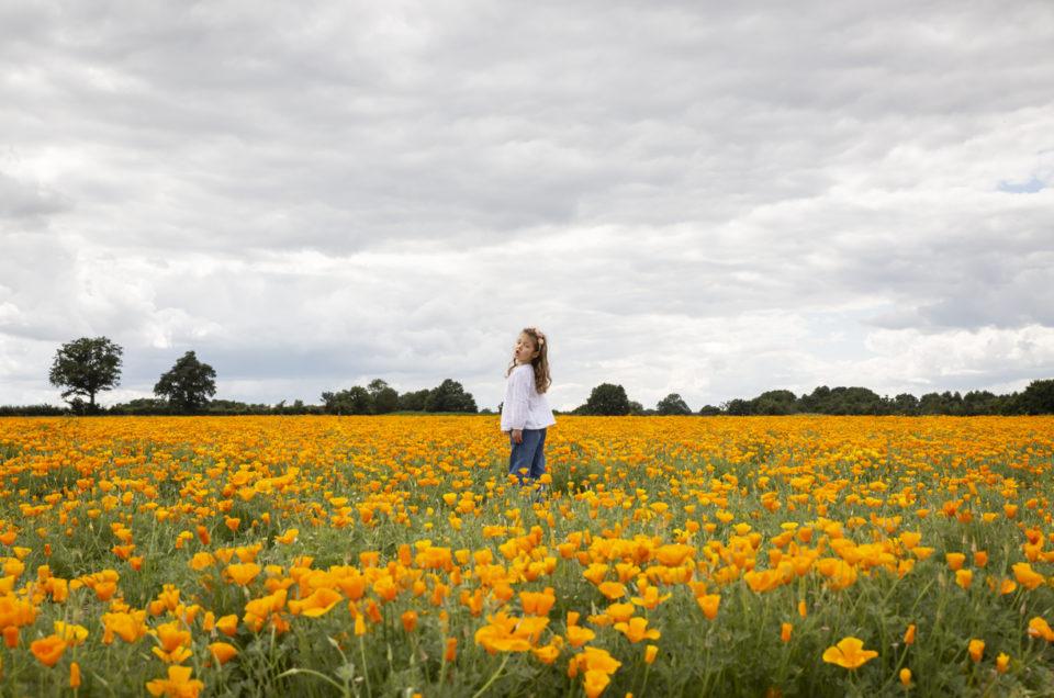 Séance photo enfant en extérieur – Champs de fleurs – Chemillé